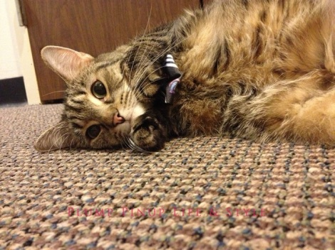 Photo: Cincinnati trip Photo source: Google images 14 Beelisty's cats Geraldine in a bow tie lying on the ground