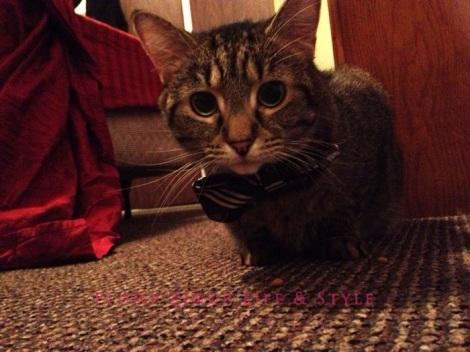 Photo: Cincinnati trip Photo source: Google images 13 Beelisty's cats Geraldine in a bow tie crouching